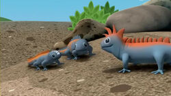 Marine Iguanas (Series 1 - Episode 43).mp4 000089000