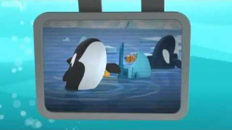 Creature Report - Arctic Orcas