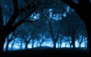 Mystical-forest-blue-light-effect-wallpaper-2317