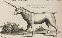 John Jonston Monoceros seu Unicornu Iubatus