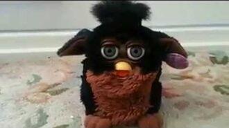 Major Furby Malfunction