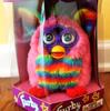 Rainbow furbaby