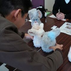 A prototype Furby visible in a photo taken at Tomy's headquarters in Katsushika, Toykyo. The photo shows two Furbys having their stomachs pressed together for a few seconds.