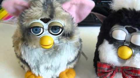 My furby fake work !