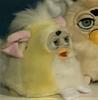 Yellowfurbybaby