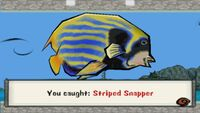 Striped Snapper