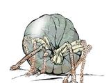 Bandit spider