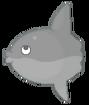 Sunfish result