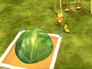 Big brussels sprout on the sandbox.png