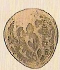 Amphithere Dragon Egg