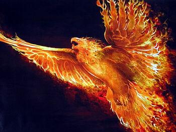 Phoenix bird picture