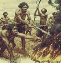 Homo habilis fire