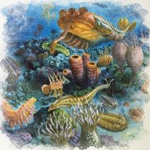 Cambrian