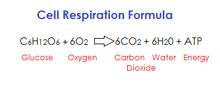 Respiration formula
