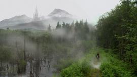 Floresta encantada2