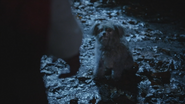 5x18 Ruby Chaperon Rouge dos main Toto chien