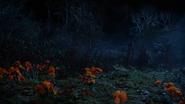 5x18 champ prairie de coquelicots fleurs pavots Dorothy Gale Ruby Chaperon Rouge arrivée territoire prudence précaution