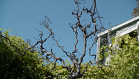 6x07 café Granny arbre arbuste feuilles mort eau Achéron Rivière des Âmes Perdues