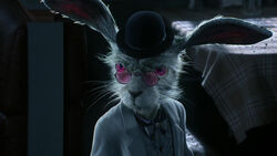 Infobox Weisses Kaninchen
