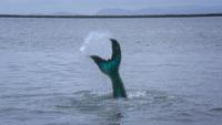 3x07 Ariel queue de sirène poisson portail océan