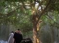 Portal-Baum der Weisheit