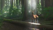 1x07 cerf clairière forêt enchantée