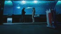 4x11 M. Gold requin Ursula aquarium