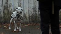 4x18 Pongo enchanté par Cruella Henry attaque
