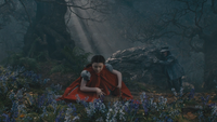 Into the Woods Chaperon Rouge Grand Méchant Loup cueillette champ de fleurs Hello Little Girl