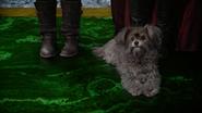 5x18 Toto chien réveil Dorothy Gale