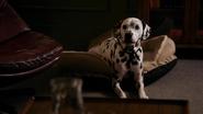 2x10 Pongo assis panier cabinet du Dr Archie Archibald Hopper