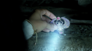 6x05 Crypte cimetière Jasmine retrouve Scarabée d'or