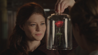 5x01 Belle French rose enchantée