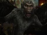 Monos Voladores