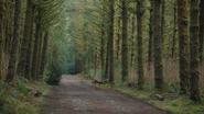 3x21 forêt enchantée
