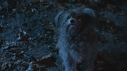 5x18 Toto chien couinement