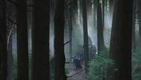 3x12 troupe forêt enchantée