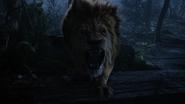 6x18 Lion Poltron rugissement