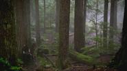 2x19 Robin des Bois attente forêt de Sherwood