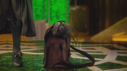 5x16 Toto truffe chien apparition cachette sac besace
