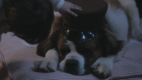 2x21 Michel Darling Nana chien saint-bernard chapeau casquette
