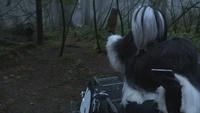 4x18 Henry Mills Pongo chien dalmatien Cruella d'Enfer voiture DEV IL téléphone ordre traque chasse poursuite forêt Storybrooke
