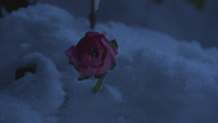6x17 fleur de fée