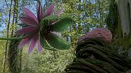 7x06 fleur plante carnivore attaque Javotte dos