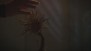 7x06 Ivy Belfrey main pétales plante fleur magique