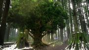 Shot 1x20 Verzauberter Baum