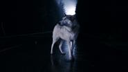 1x01 loup Storybrooke limites de la ville
