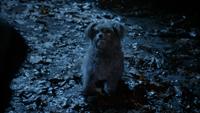5x18 Toto chien aboiement explication traque piste Sorcière