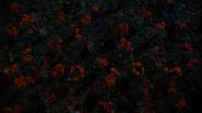 5x18 champ prairie de coquelicots fleurs pavots