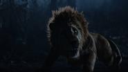 6x18 Lion Poltron apeuré